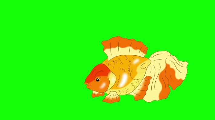Goldfish Floating in Aquarium Chroma Key