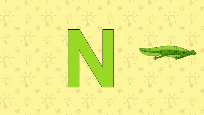 Newt. English ZOO Alphabet - letter N