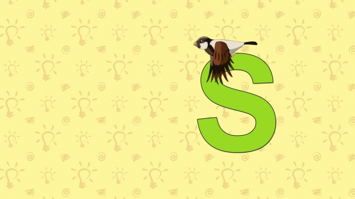 Sparrow. English ZOO Alphabet - letter S