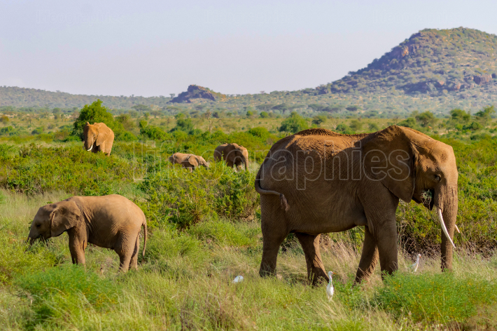 A elephant family in the bush