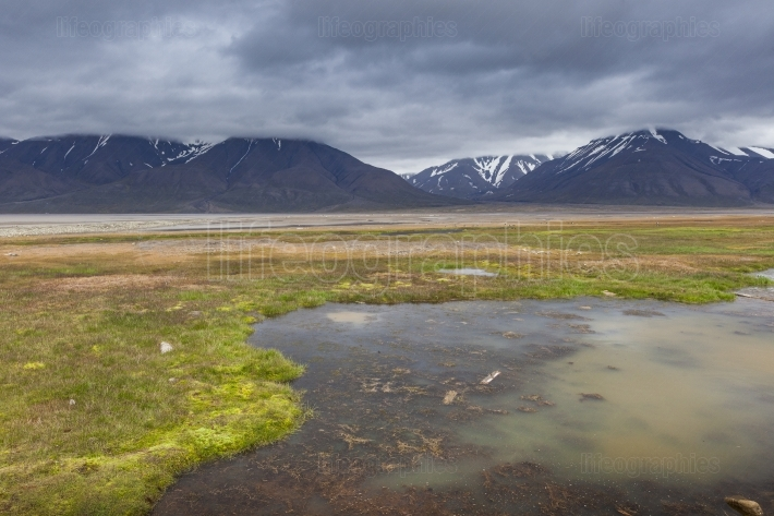 Arctic tundra in summer, Svalbard, Norway