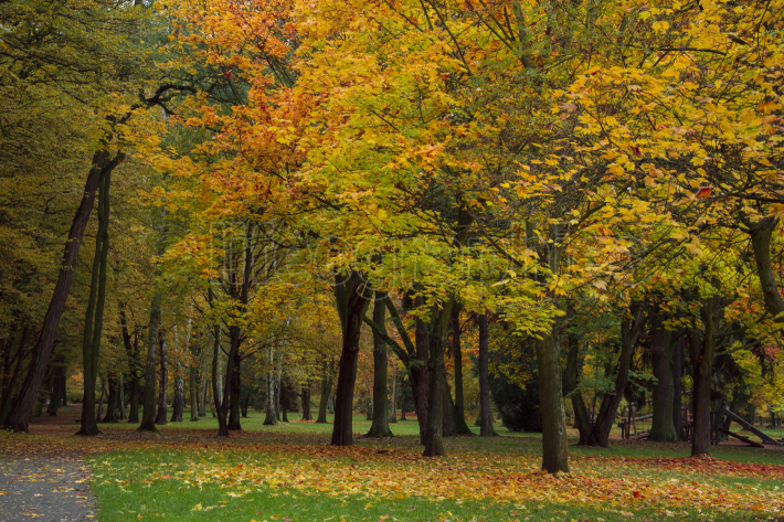 Autumn park with trees and leaves  photo  Beautiful picture, bac