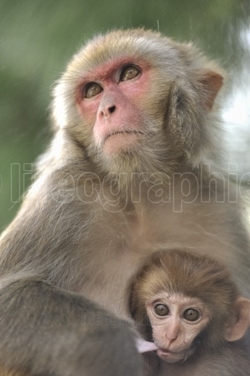 Baby monkey and her mother