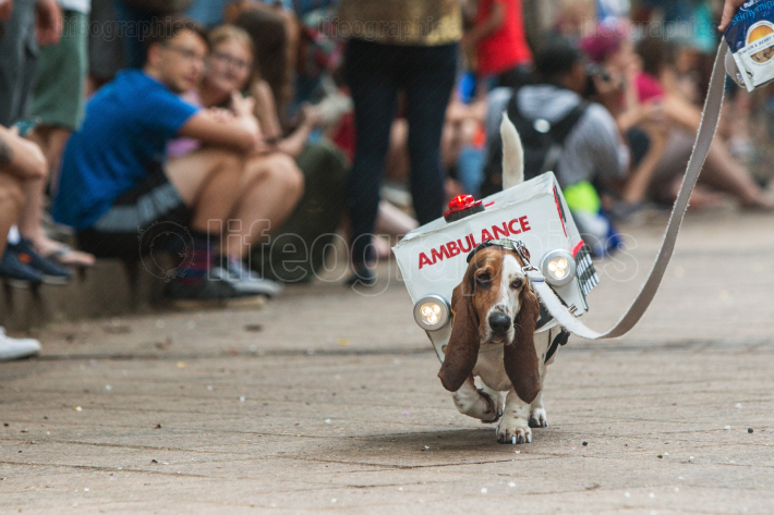Basset Hound Wears Ambulance Costume In Atlanta Doggy Con Event