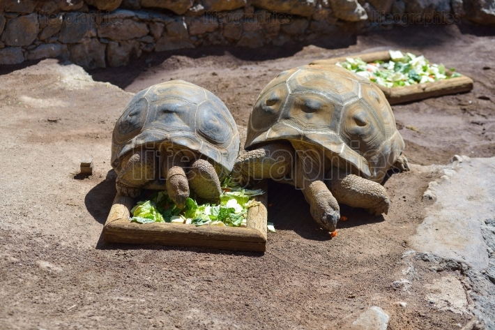 Big tortoise, turtles in animal park in Gran Canaria, Spain