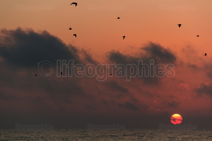 Birds flying over the sea at sunrise