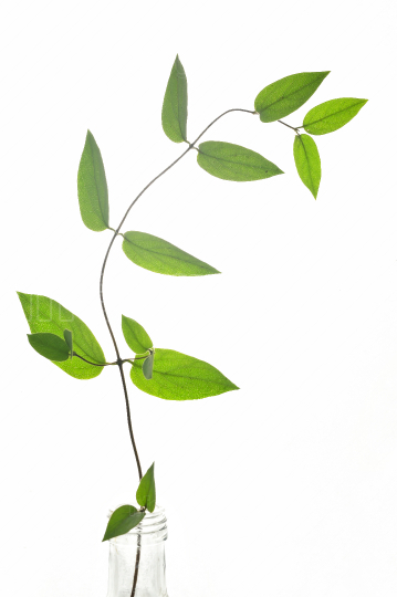 Branch Of Green Leaves Isolated