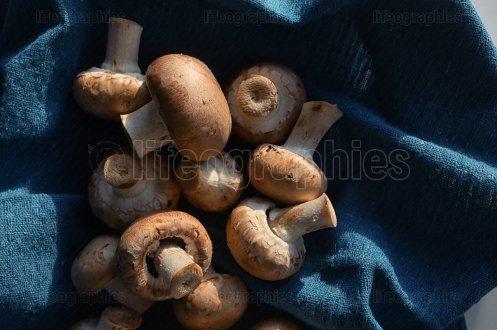 Brown Champignon Edible Mushrooms