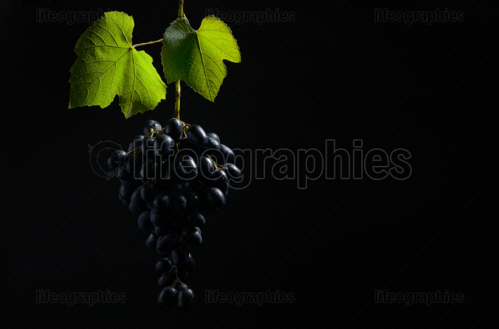 Bunch of grapes on black background