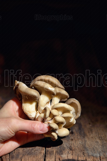 Bunch of shimeji mushrooms on wooden table
