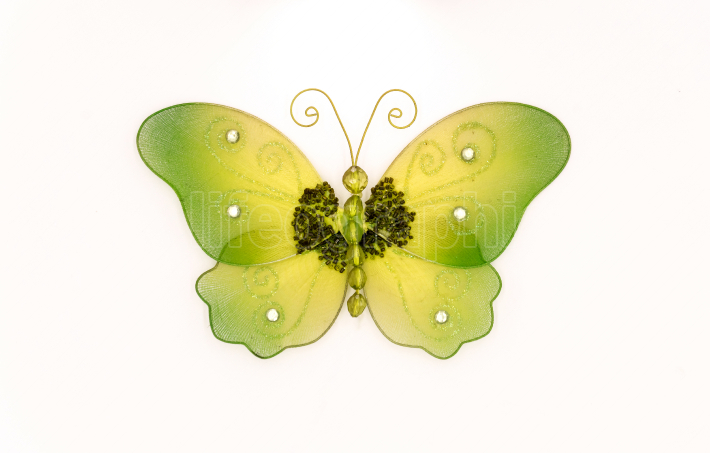 Butterfly in fabric of green color