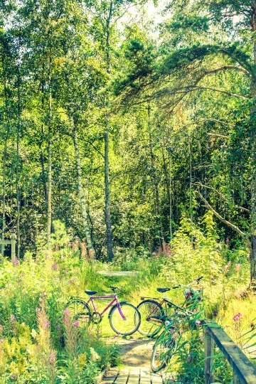 Bycicles in a green forest