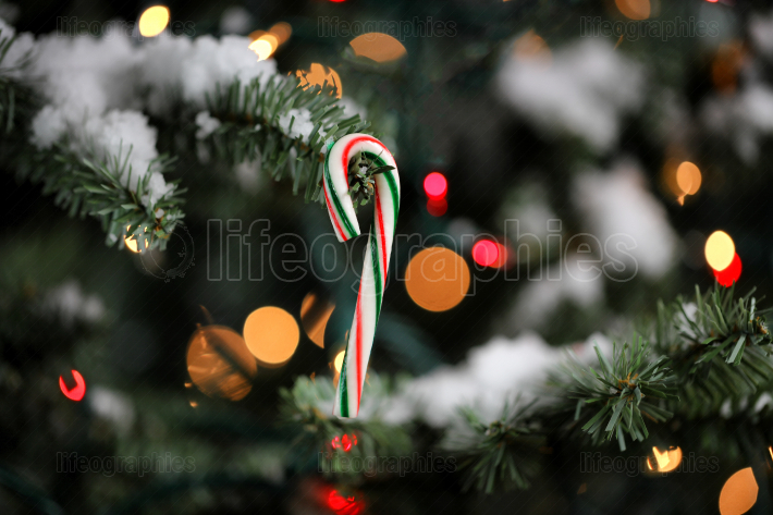 Candy cane ornament hanging in artificial Christmas tree with gl