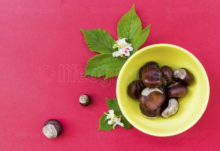 Chestnuts in yellow bowl with leaves and flowers on red backgrou