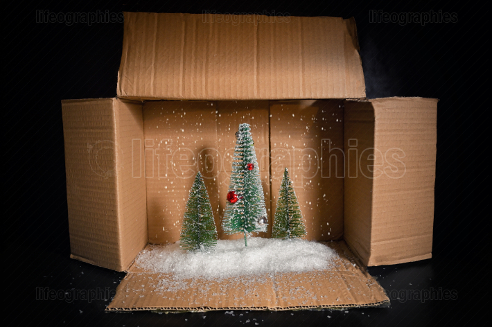 Christmas tree in Cardboard Box