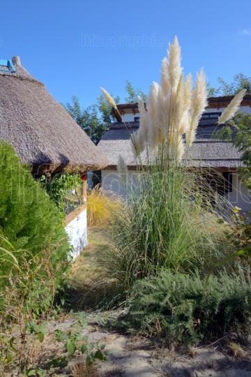Cottages and reed in Danube Delta