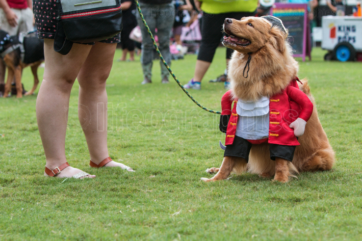 Dog Dressed In Pirate Costume At Atlanta Doggy Con Event