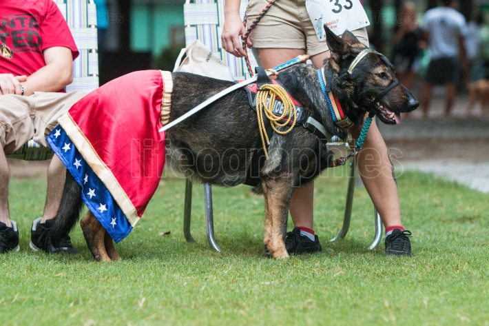 Dog Wears Wonder Woman Costume At Atlanta Doggy Con Event