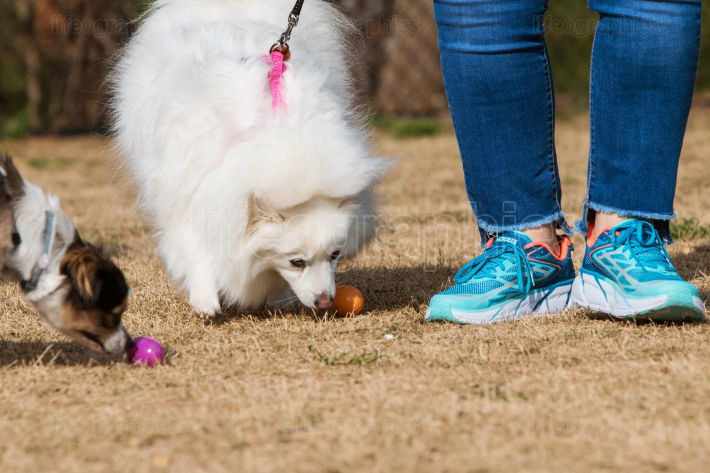 Dogs Sniff Out Doggy Treats At Canine Easter Egg Hunt
