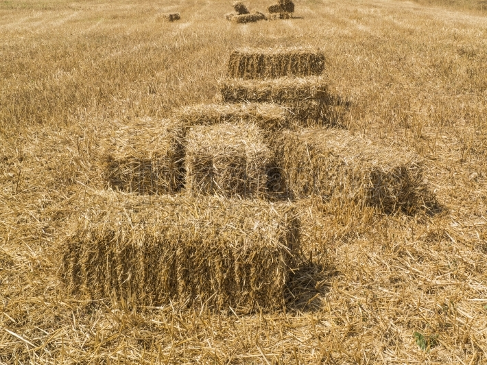 Dry yellow straw in farm,Straw bales