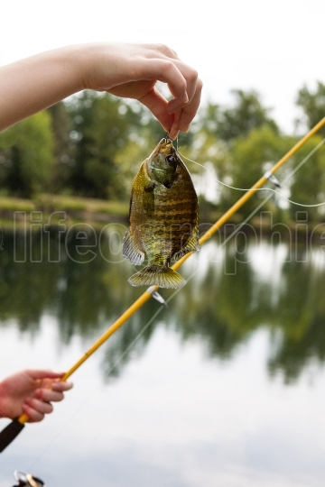 Females hand holding large sunfish at lake