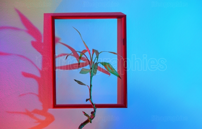 Flower and  Frame Hanging On A Colorful Wall