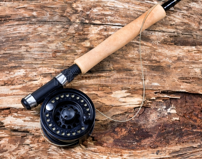 Fly fishing reel on dry old weathered tree