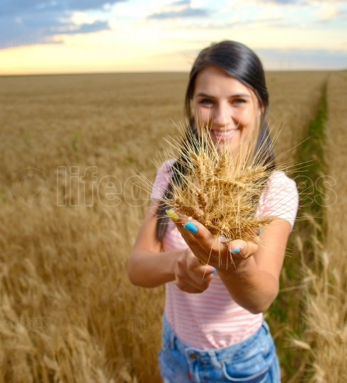 Girl gives you a bunch of ears of wheat.Focus on a bouquet