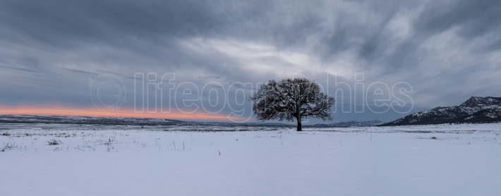 Gorgeous landscape panorama showing a big oak tree
