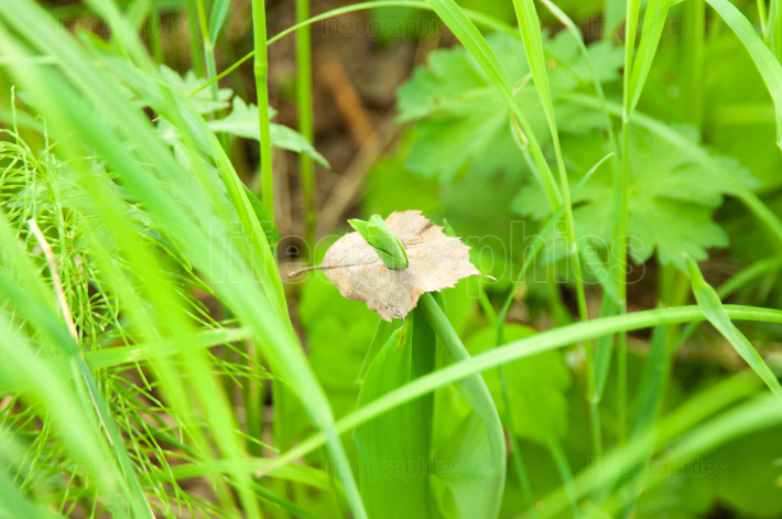 Grass and leaf 1