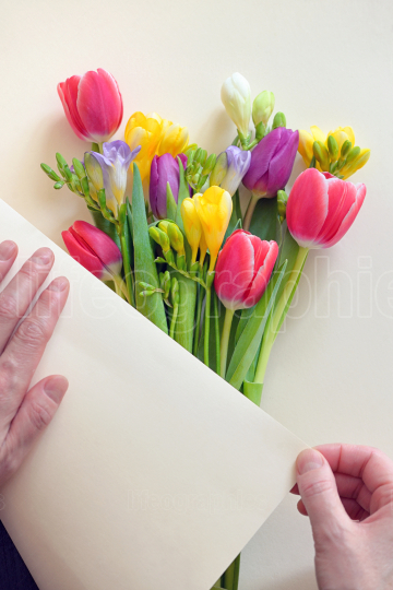 Hands and Bouquets Of Tulips and Freesia