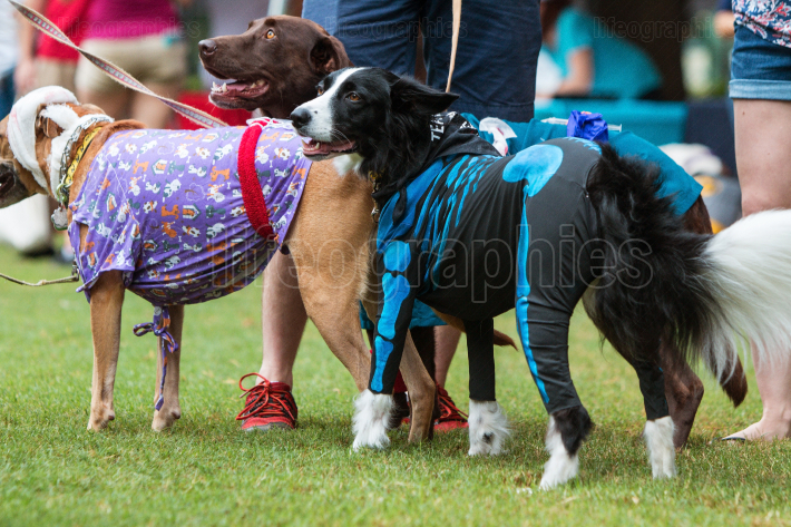 Happy Dogs Wear Various Costumes At Atlanta Doggy Con Event