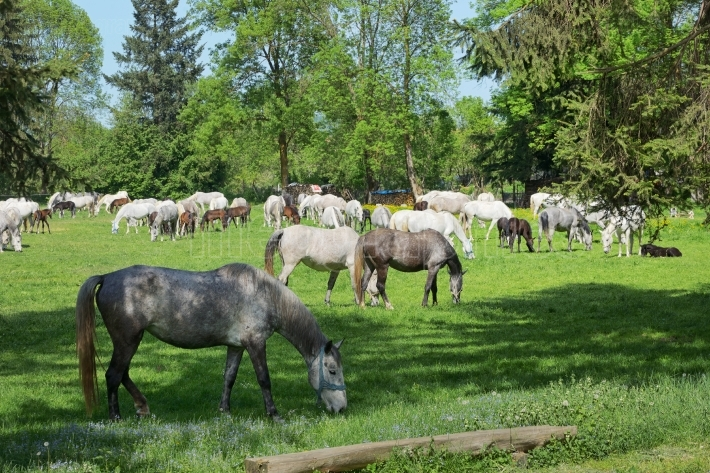 Herd of horses on the field