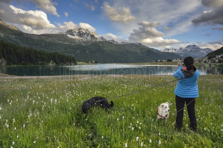 Hiker with two dogs close to silvaplana lake near st. moritz