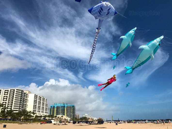 Interesting Marine Life Kites Fly Above Fort Lauderdale Beach