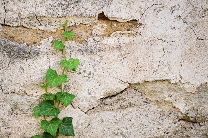 Ivy crawling up a stone wall
