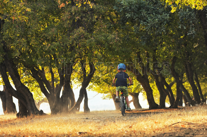 Little boy cycling on forest