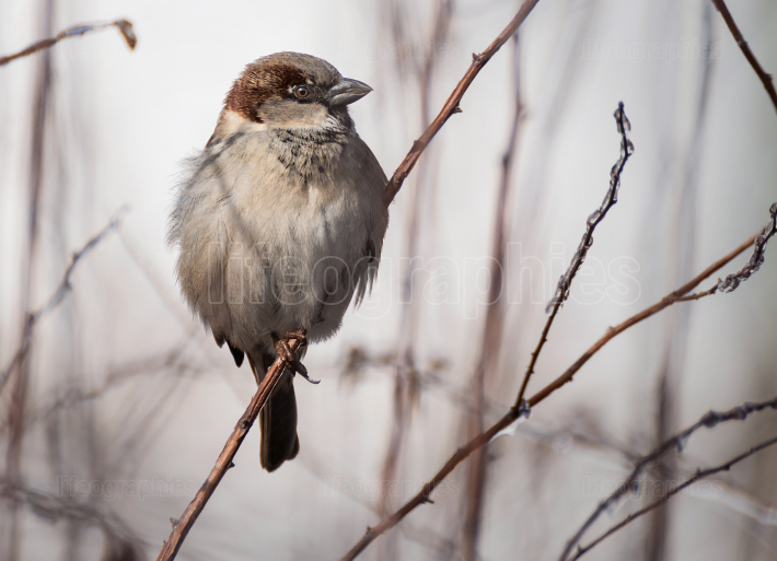 Little sparrow sits on a branch