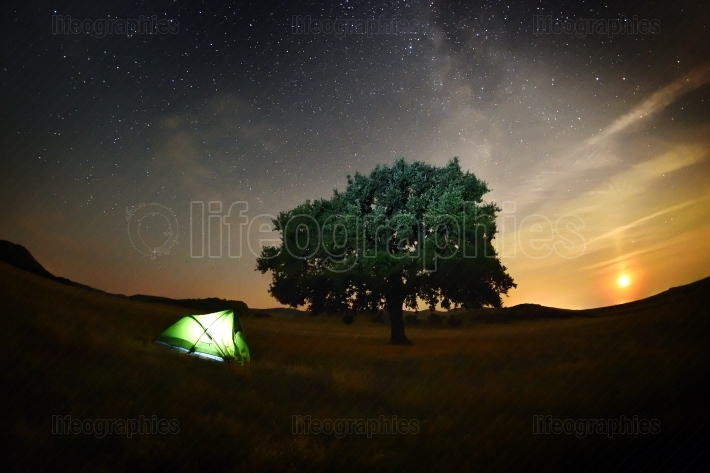 Lonely tree and tent on field under the night sky, Dobrogea, Rom