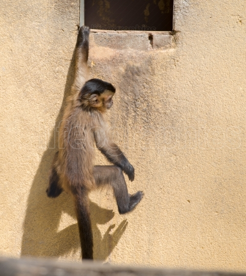 Monkey at zoo