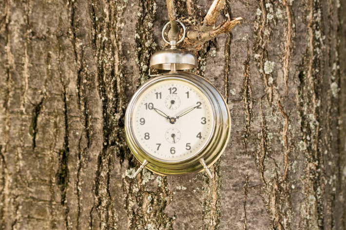Old fashioned clock hanged on a tree