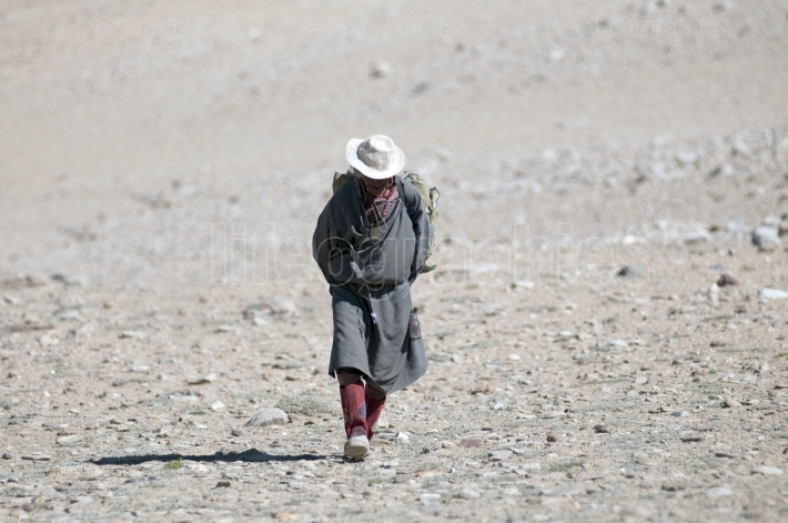 Old ladakhi man walking on korzok plateau.