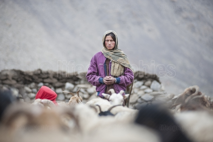 Old lady during brake of milked sheep to produce food reserves for winter