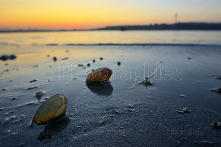 Open mussel shells on sand