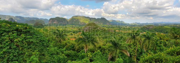 Panoramic view of Cuban green rain forest