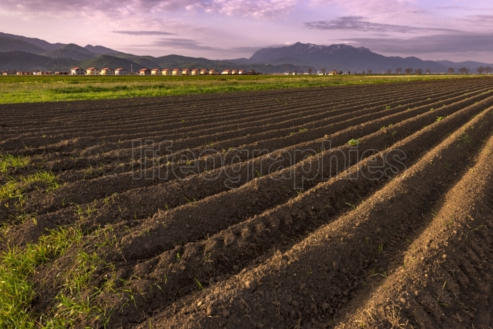 Plowed field of crops in the spring evening light, prepared to b