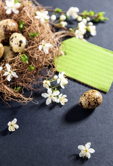 Quail eggs in nest with white flowers on textured black backgrou