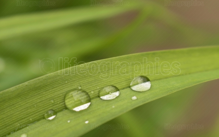 Rain drops close up on leaf