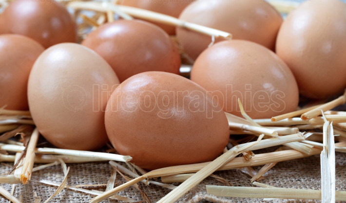 Raw organic brown farm raised eggs on straw