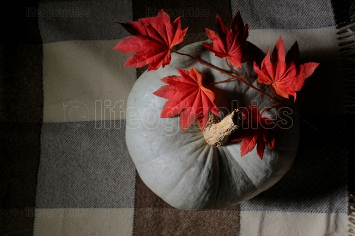 Raw pumpkin on rustic carpet